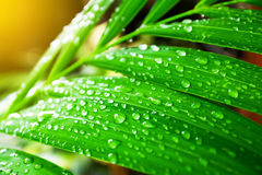 Green leaf with water drops. Under sunlight Royalty Free Stock Images