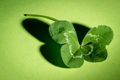 Green, Leaf, Water, Macro Photography royalty free stock image