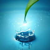 Green leaf with water splash. Green leaf with water drop Stock Photos