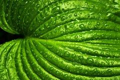 Green, Leaf, Water, Vegetation Royalty Free Stock Photos