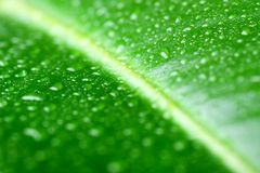 Green leaf with waterdrops. Macro, shallow DoF royalty free stock photography