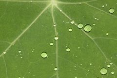 Green leaf with waterdrops Stock Images