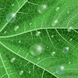 Green leaf with waterdrops Stock Photography