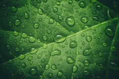 Green leaf with waterdrops after rain Royalty Free Stock Photo
