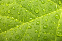 Green leaf with waterdrops Stock Photo