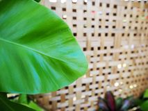 Green leaf on weave bamboo. Green leaf on top of weave bamboo sheet Stock Image