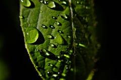 Green leaf whit rainy drops Stock Photos