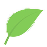 Green leaf  on white Stock Image