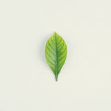 Green leaf on white fabric for model Stock Photography