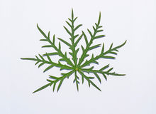Green leaf on white. Picture wallpaper  art  background nature Royalty Free Stock Photos