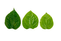 Green leaf on white Royalty Free Stock Images