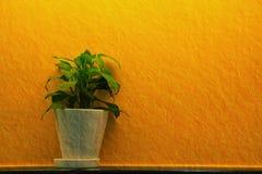 Green leaf in white vase Stock Photos