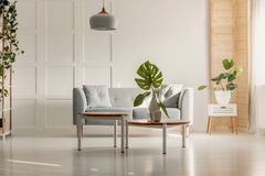 Green leaf in white vase on round wooden coffee table in spacious living room with grey couch, plants and wooden furniture. Real photo concept stock photo