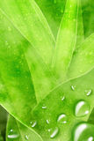 Green Leaf With Drops Of Water Stock Images