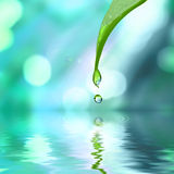 Green Leaf With Water Drop Water Royalty Free Stock Photos