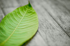 Green leaf on wood table nature background. Royalty Free Stock Image