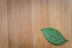 Green leaf on wood table nature background. Stock Image