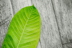 Green leaf on wood table nature background. Stock Photos