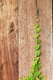 Green leaf on wood wall Royalty Free Stock Images