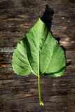 Green Leaf on Wooden Background Stock Photography