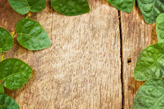 Green Leaf on Wooden for Background Uses. Royalty Free Stock Images
