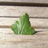 Green Leaf. Wooden Bench. Nature Royalty Free Stock Images