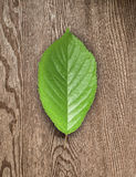 Green leaf and  wooden board. Royalty Free Stock Photos