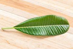 Green leaf on wooden table Stock Photo
