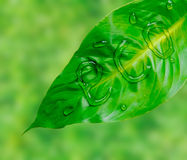 Green leaf with word eco Royalty Free Stock Photo
