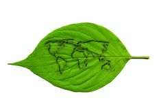 Green leaf world map Stock Images