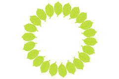 Green leaf  wreath. Circular leaf wreaths for your text. Stock Photography