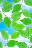 Green leafe  in sunny day. Stock Photos