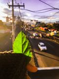 Green leafe wallpaper with highway behind royalty free stock image