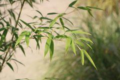 Green Leafed Plant royalty free stock images