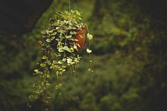Green Leafed Plant In Brown Plastic Pot stock photography