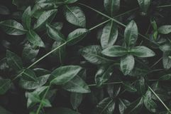 Green Leafed Plant Close-up Photography Royalty Free Stock Photo