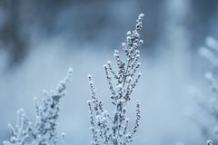 Green Leafed Plant Covered by Snow royalty free stock photo
