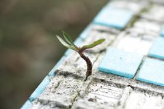 Green Leafed Plant on Sand stock images