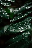 Green Leafed Plant With Water royalty free stock photos