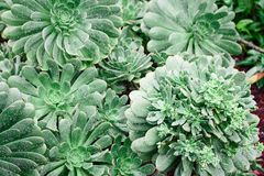 Green Leafed Plants royalty free stock photo