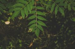 Green Leafed Tree Stock Image