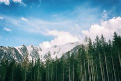 Green Leafed Trees With Snowy Mountain Background stock photo