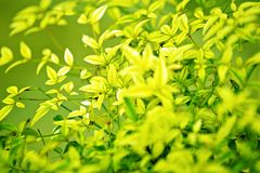 Green Leafes Background Stock Photo
