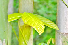 Green leafes Stock Photography