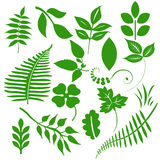 Green Leafs. A set of 16 green leafs Stock Photography