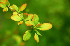 Green Leafs. On defocused background Stock Images