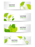 Green Leafs Royalty Free Stock Image