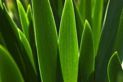 Green leafs. A plant with green leafs Stock Images