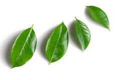 Green leafs. Composition with four green leafs isolated over white background royalty free stock images