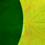 Green leafs. Abstract Royalty Free Stock Photo